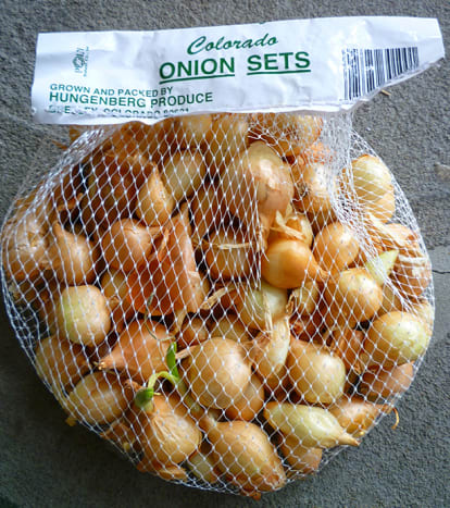 Long Day Onion Sets. The variety is Yellow Rock.