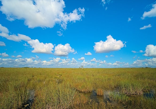 Swap grass on the Pa-Hay-Oke trail in Everglades National Park