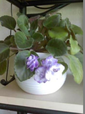 Self watering pot used.