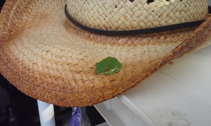 The Garden Hat Frog