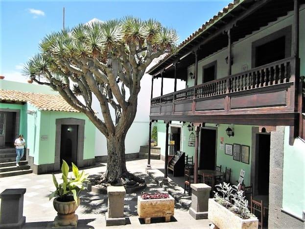 Dragon tree, Casa de la Cultura, Arucas.