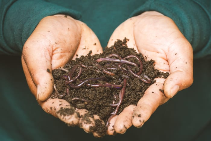 A handful of worms: Photo by Sippakorn Yamkasikorn from Pexels