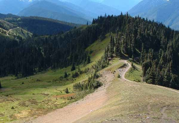 Hurricane Ridge Trail in Olympic National Park