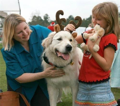 Adoption Day December 2, 2007. We meet Waco to take him home.