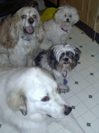 Riley, Freddie, Teddy and Waco