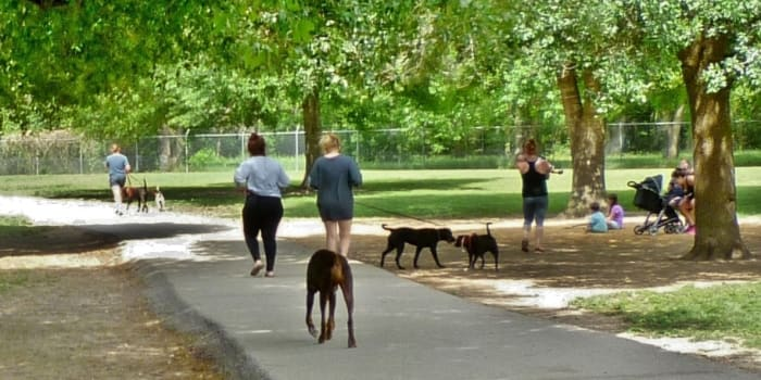 Dogs and people enjoying the dog park