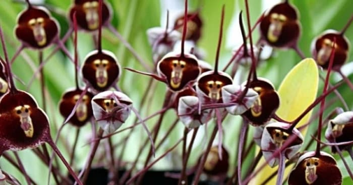 strange-but-real-plants