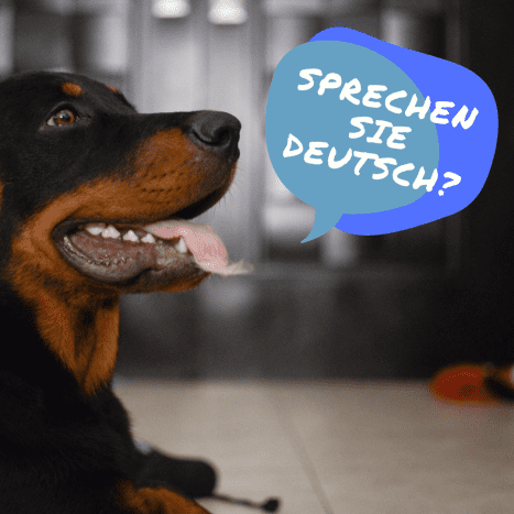Training your dog in German means following a particular but proven method.
