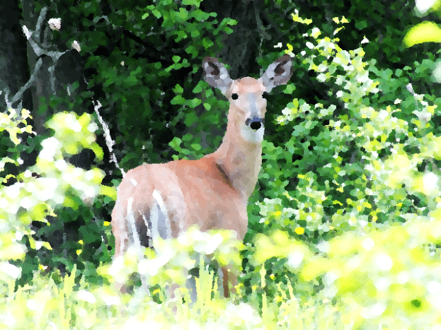 My favorite deer photo turned into an oil painting.