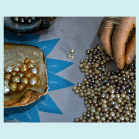 Once harvested and polished, pearls are sorted and graded.