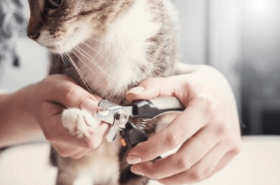 Figure 8. Personal care is essential for a dog or a cat. The figure shows the cat owner clipping the nails.