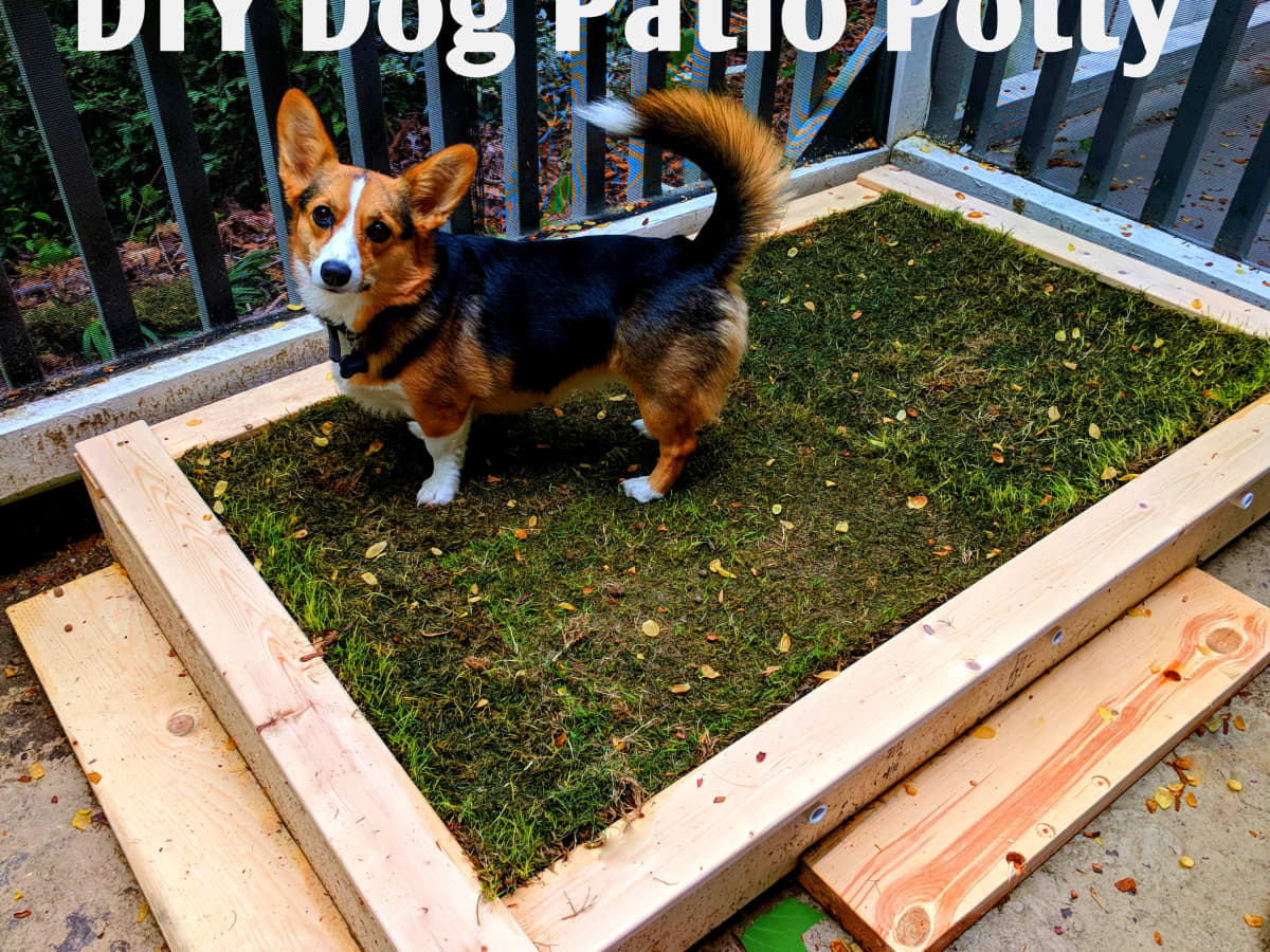 Build A Diy Patio Potty For Your Dog