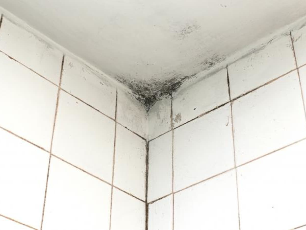 Tips For Painting Moldy Bathroom Walls And Ceilings Dengarden Home And Garden
