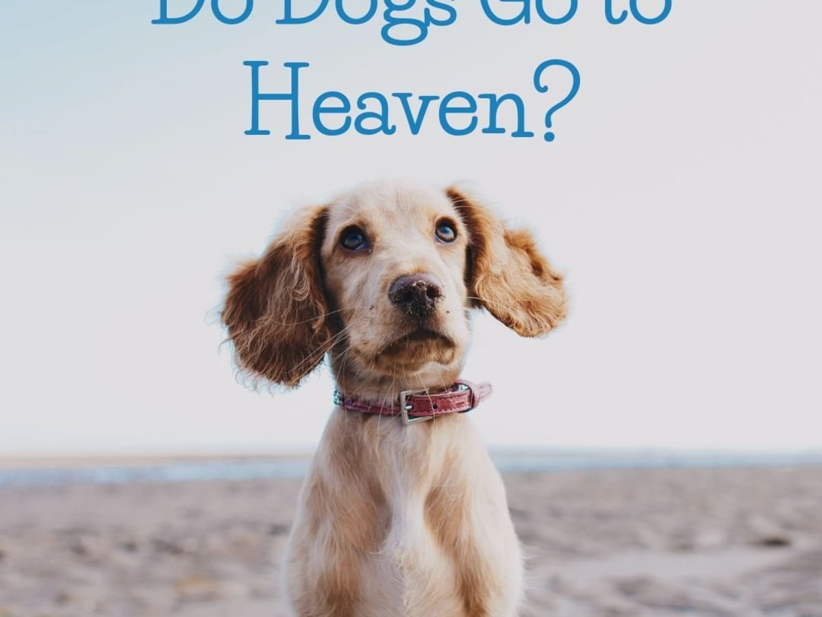 Do Dogs Go To Heaven A Christian Perspective Pethelpful By Fellow Animal Lovers And Experts