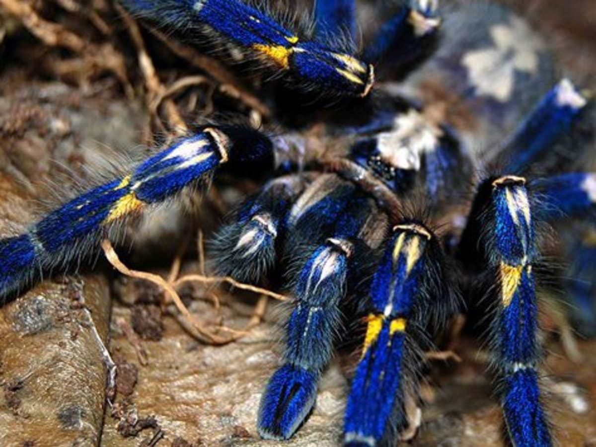 A Guide To Keeping Tarantulas By Experience Level Pethelpful By Fellow Animal Lovers And Experts