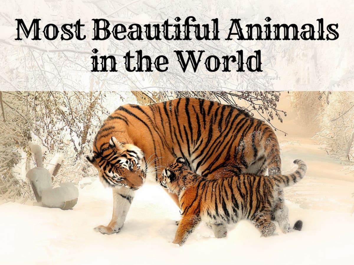 The 10 Most Beautiful and Majestic Animals in the World - Owlcation -  Education