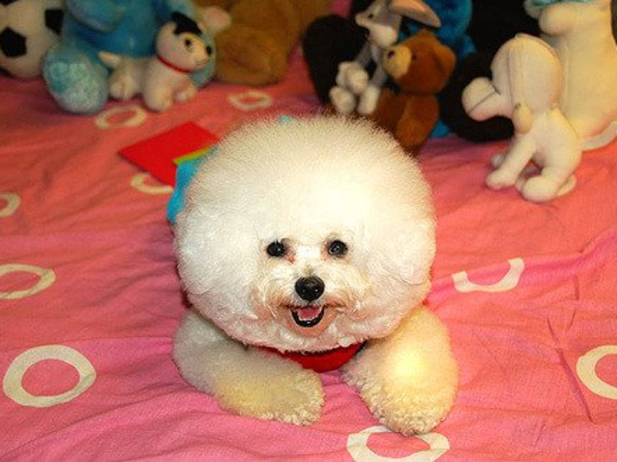 The 5 Sweetest Small And Fluffy Dog Breeds Pethelpful By Fellow Animal Lovers And Experts