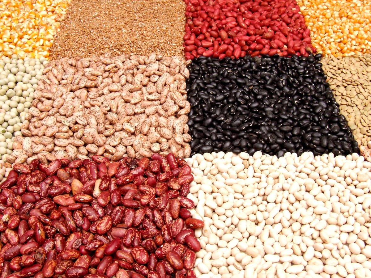Lentil Names In Hindi For English Readers Owlcation Education