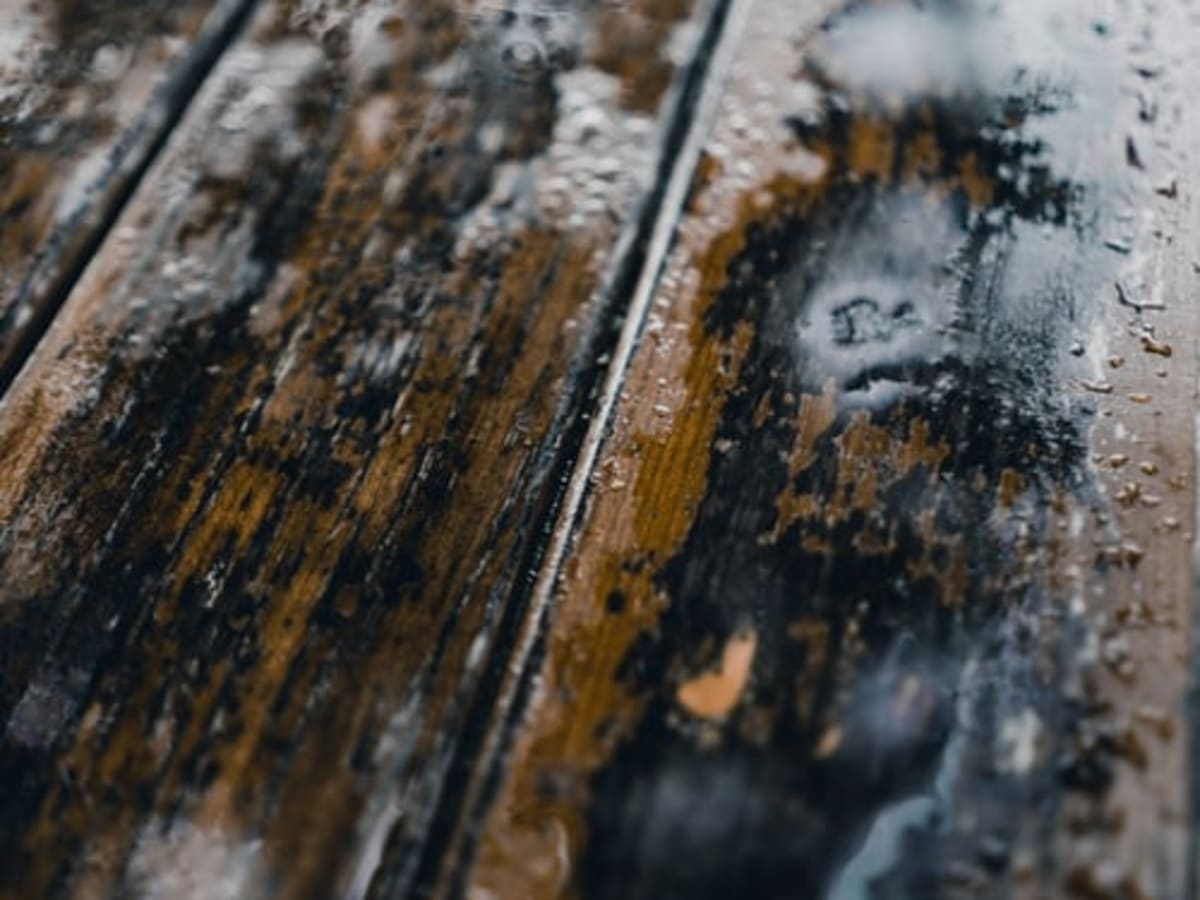 Why Mold Removal From Wood Is Harder Than You Think Hubpages