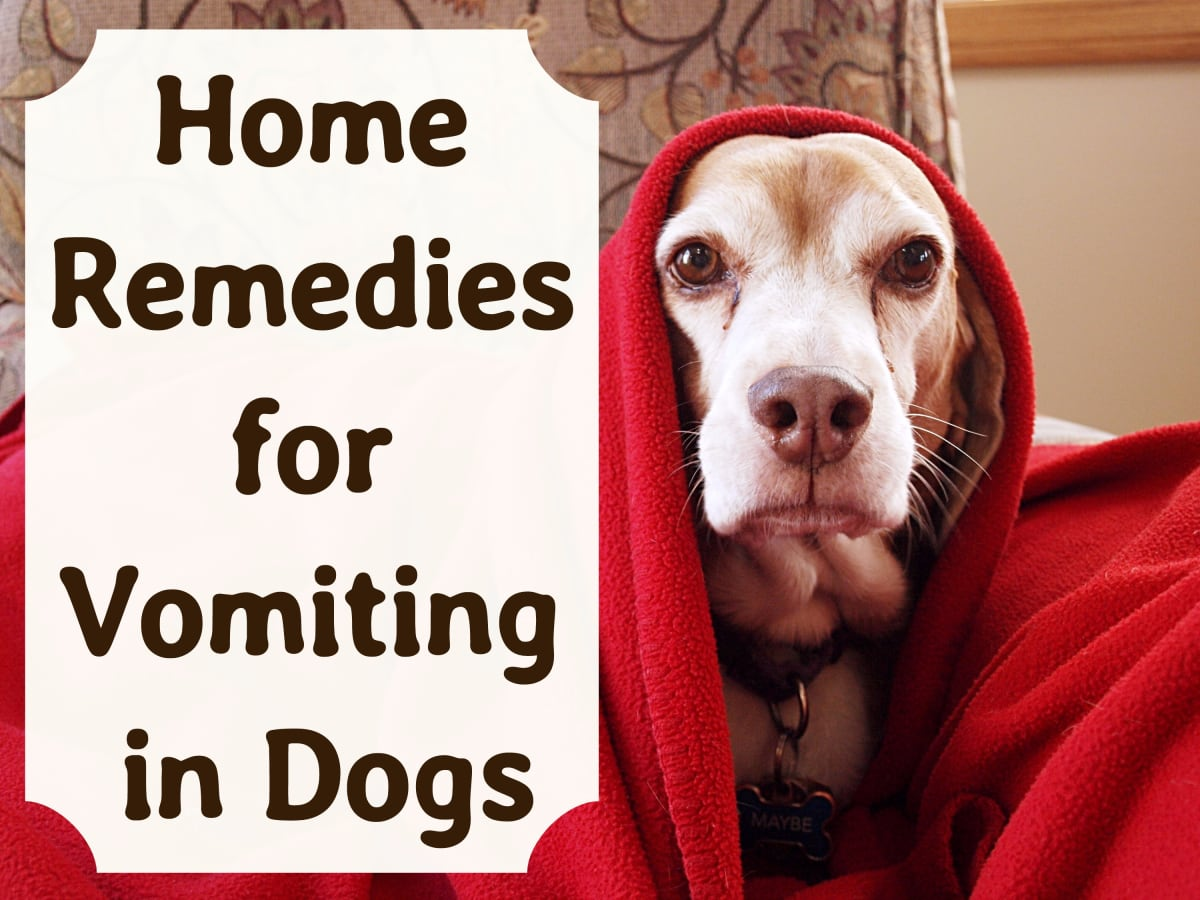 Effective Home Remedies for Vomiting Dogs - PetHelpful