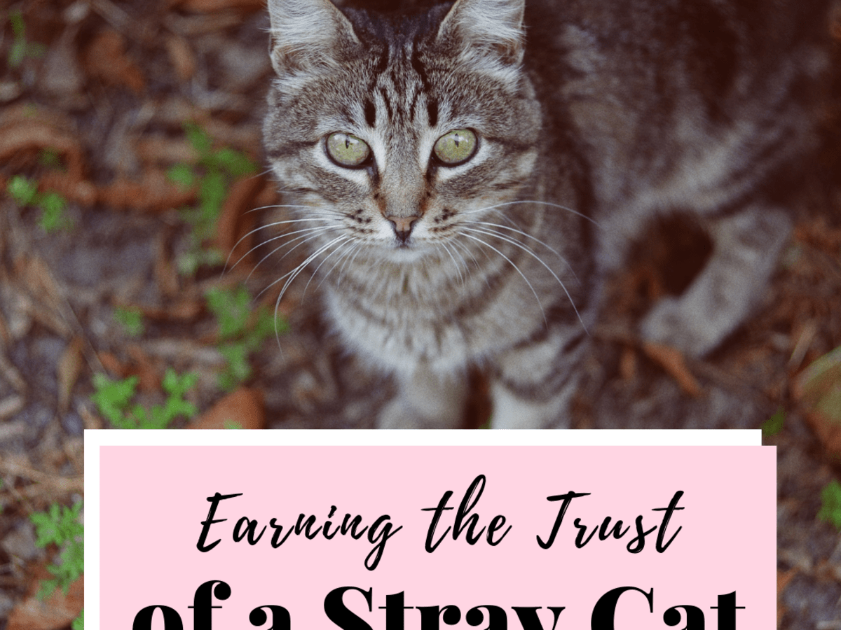 How To Win The Trust Of A Stray Cat Pethelpful