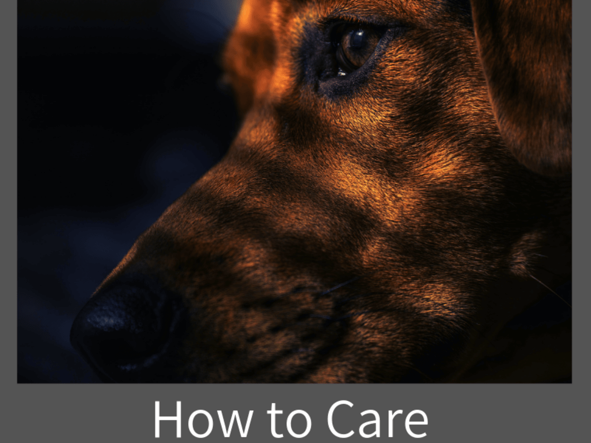 How To Care For A Blind Dog Pethelpful By Fellow Animal Lovers And Experts
