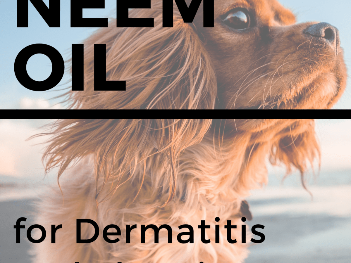Neem Oil For Dogs Stops Itching Heals Skin And Repels Fleas And Mosquitos Pethelpful By Fellow Animal Lovers And Experts
