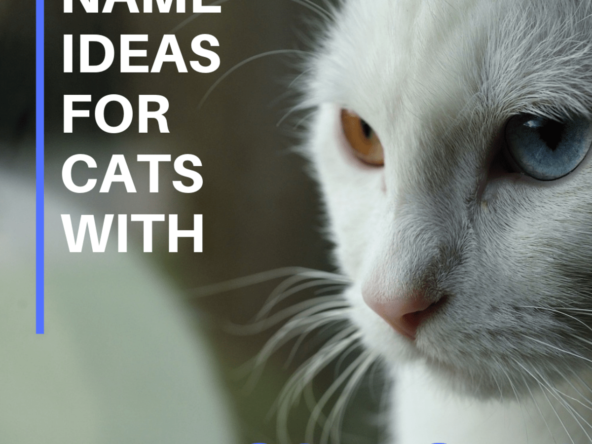 150 Names For Cats With Different Colored Eyes Heterochromia Pethelpful By Fellow Animal Lovers And Experts