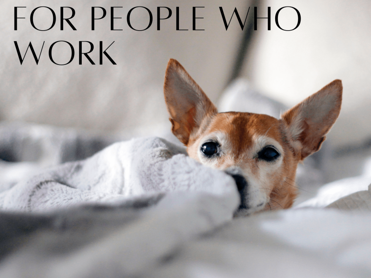 The 7 Best Dog Breeds For Someone Who Works All Day Pethelpful