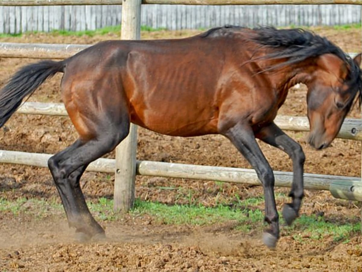 Rare Horse Breeds 4 Of The World S Rarest Horses Breeds Pethelpful By Fellow Animal Lovers And Experts