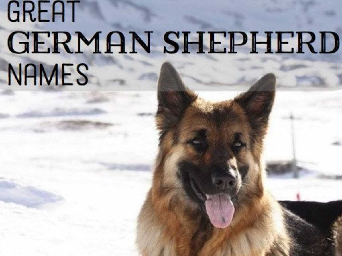 Good German Shepherd Name Ideas Pethelpful By Fellow Animal Lovers And Experts