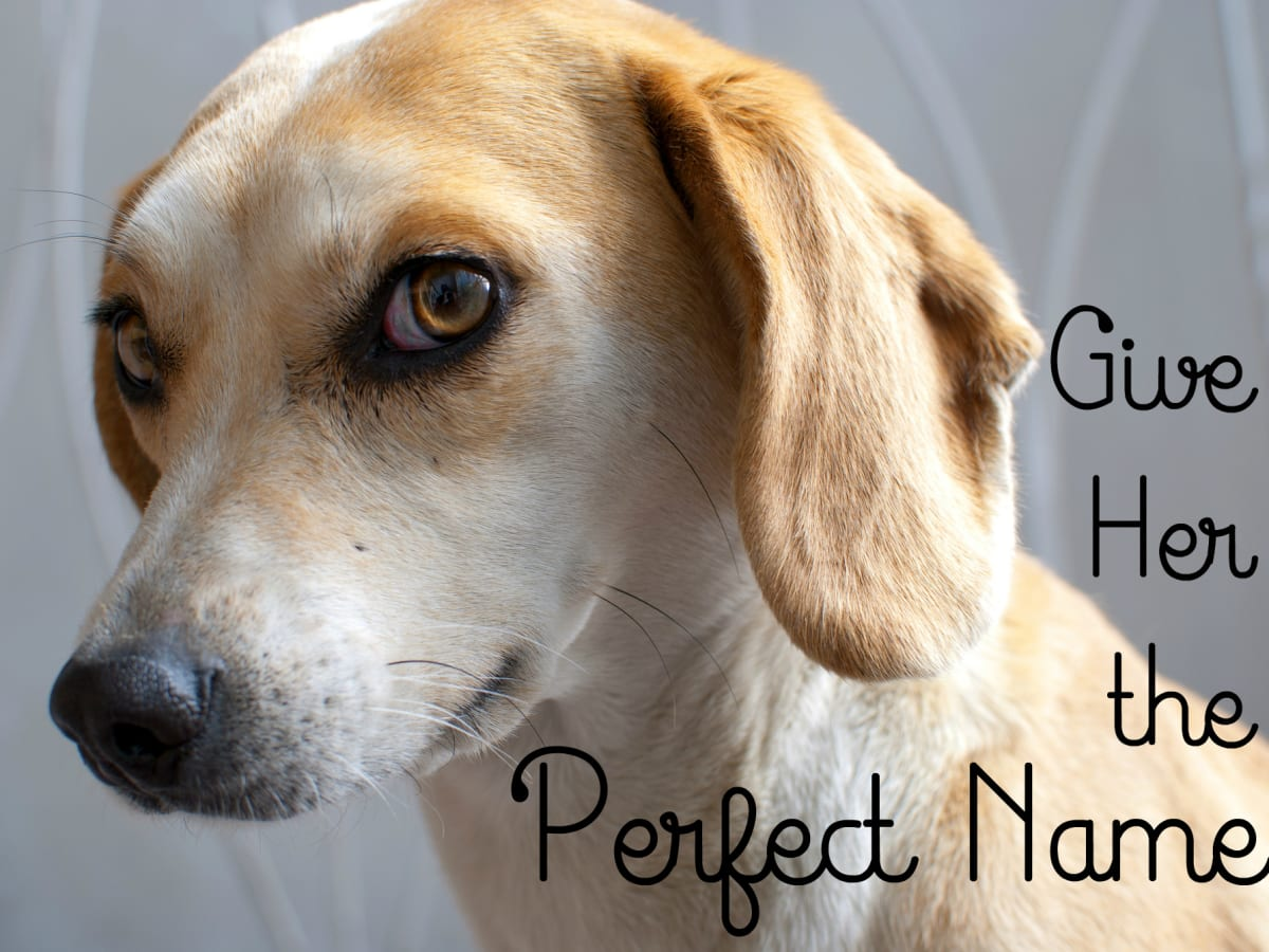 525 Cute Female Dog Names And Meanings Pethelpful By Fellow Animal Lovers And Experts