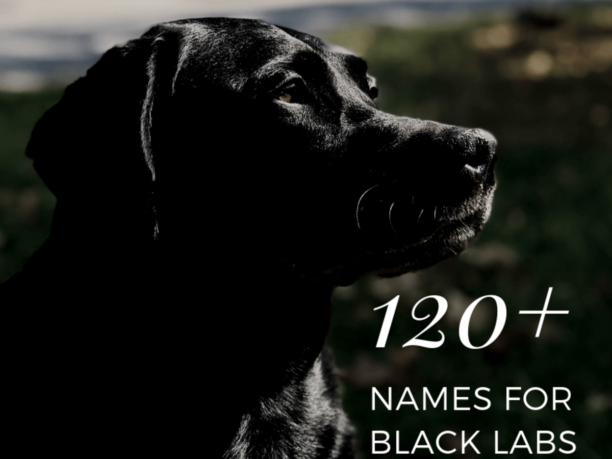 120 Best Dog Names For Black Labradors Pethelpful By Fellow Animal Lovers And Experts