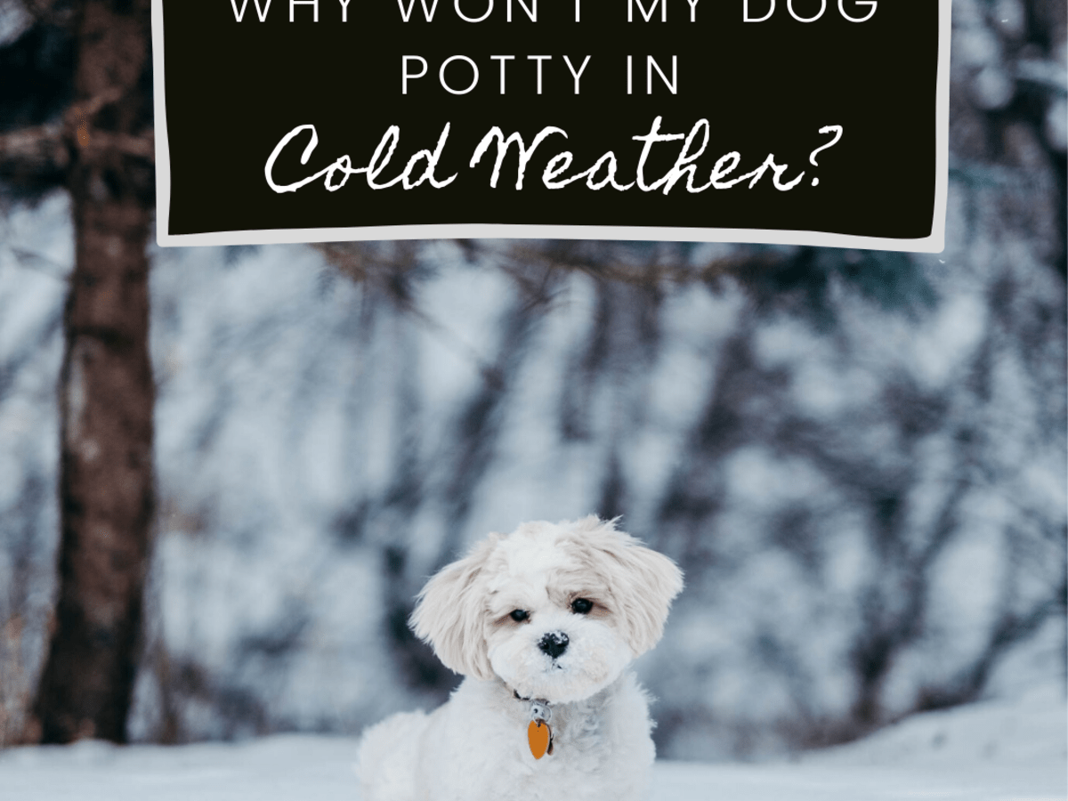 Help My Dog Won T Potty When It S Cold Outside Pethelpful By Fellow Animal Lovers And Experts
