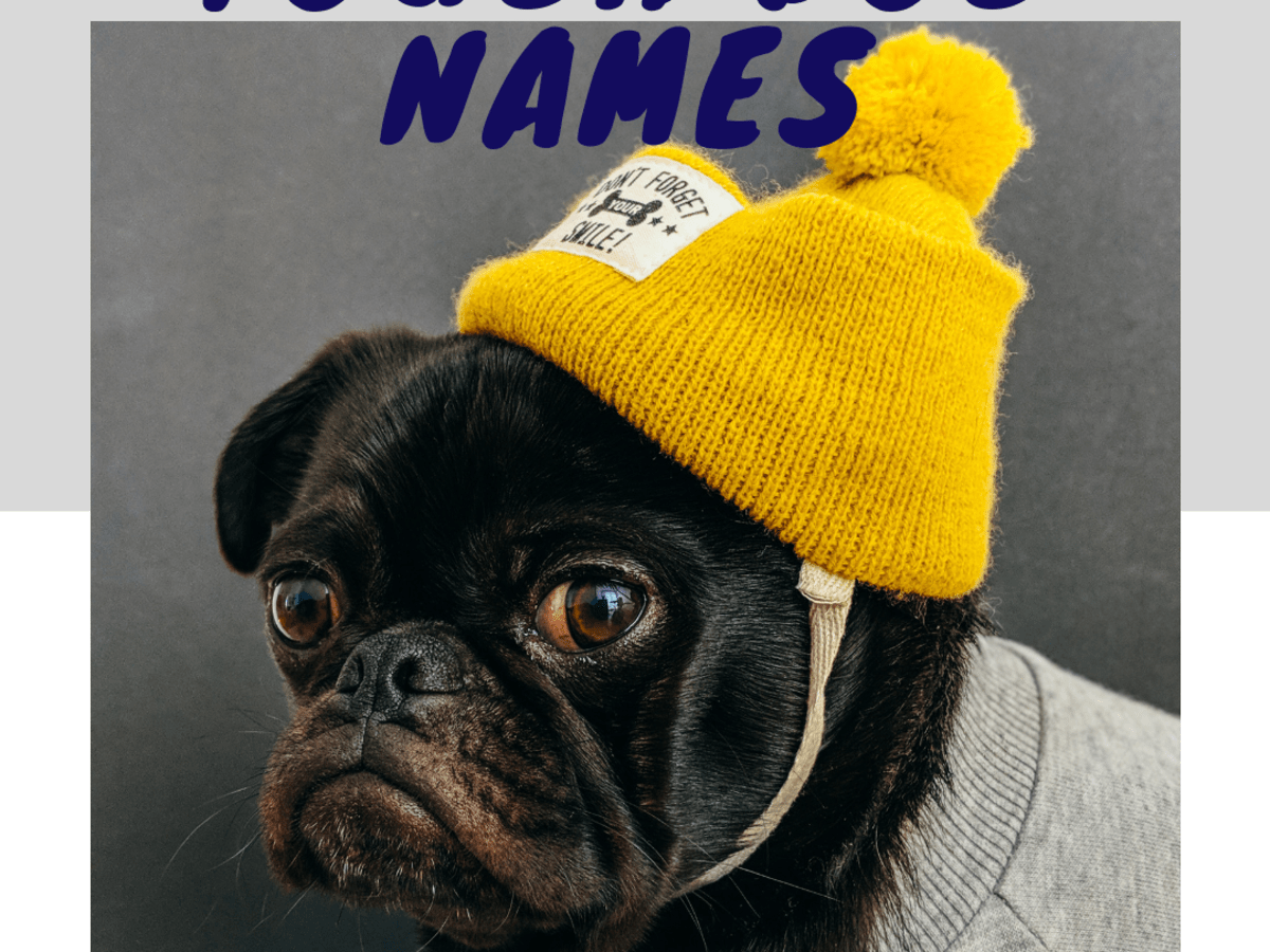 100 Scary Tough And Strong Guard Dog Names Pethelpful By Fellow Animal Lovers And Experts