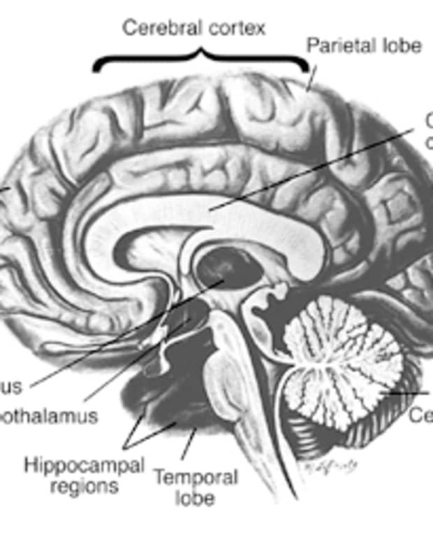 wet_brain_thiamine_diet_and_abstinence