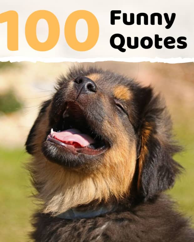 100-funny-sayings-quotes-and-phrases