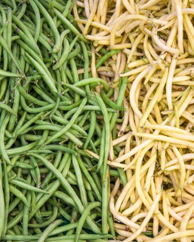 grow-green-beans-from-seed