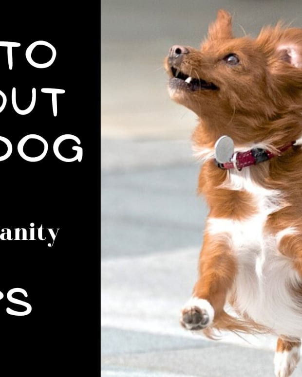 how-to-tire-your-dog-out
