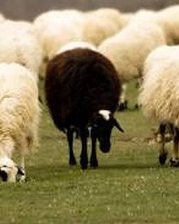 the-black-sheep-of-the-family