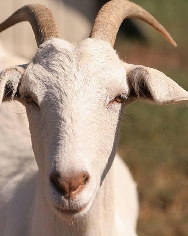 xenotransplantation-from-animals-to-humans