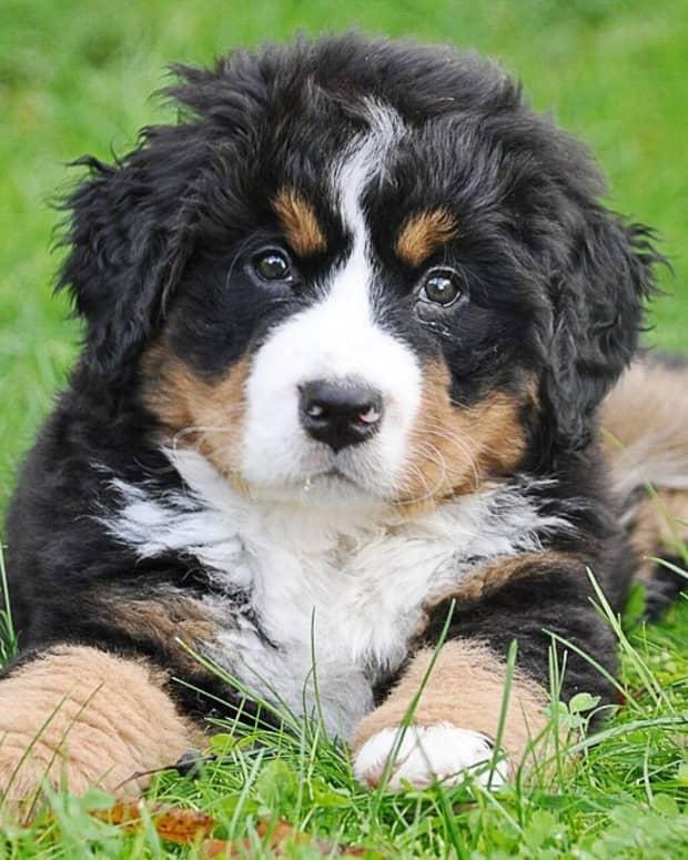 surprising-dog-facts-senses-and-behavior