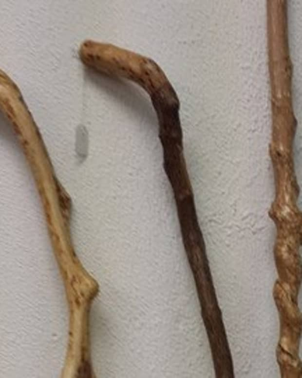 walkingstick-craft-collecting-blanks-from-natural-sources