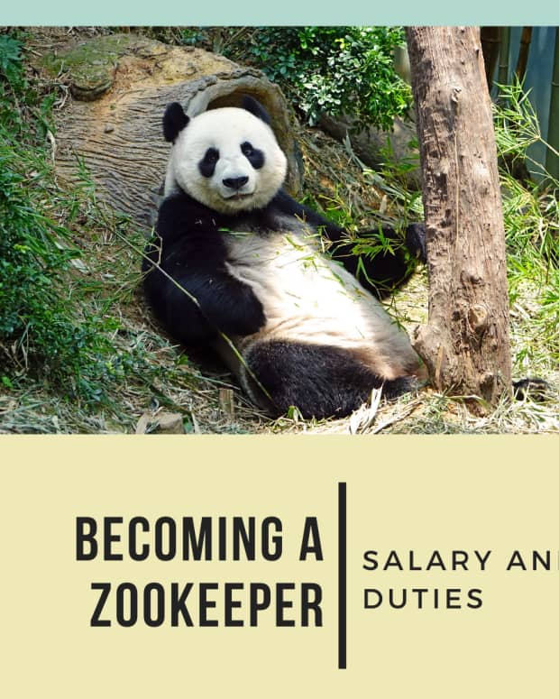 becoming-a-zookeeper-zookeeper-salary-and-duties