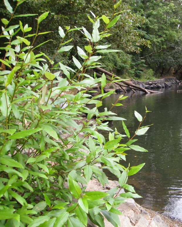 corvallis-swimming-holes
