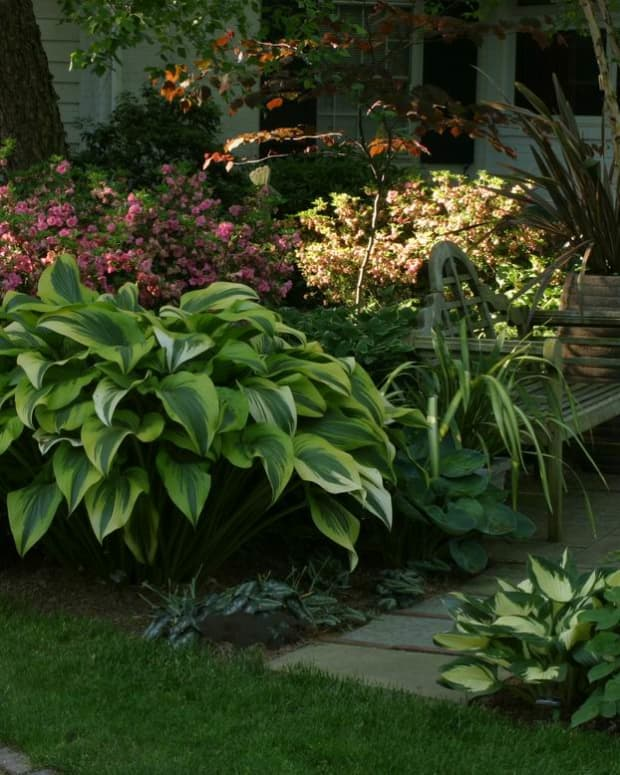 how-to-plant-and-care-for-shade-loving-hostas