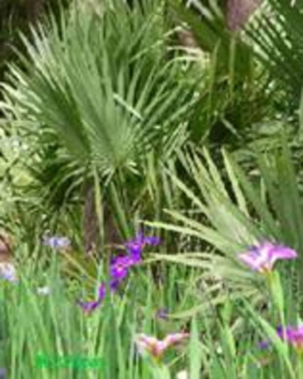 oklahoma-palm-trees