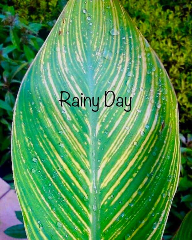 rainy-dayhaiku