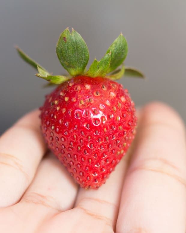 what-causes-mushy-strawberries