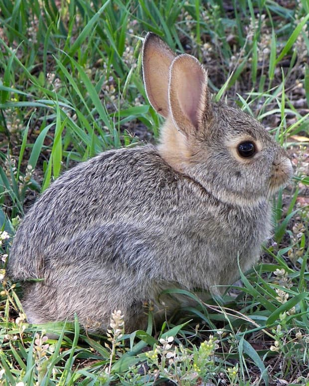 how-to-rabbits-out-of-the-garden
